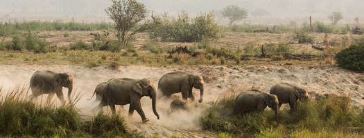 JIM CORBETT WILDLIFE PHOTO TOUR